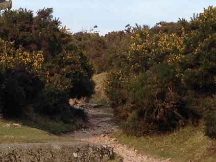 Gorse and bracken can take over and the controlled burning keeps them in check.
