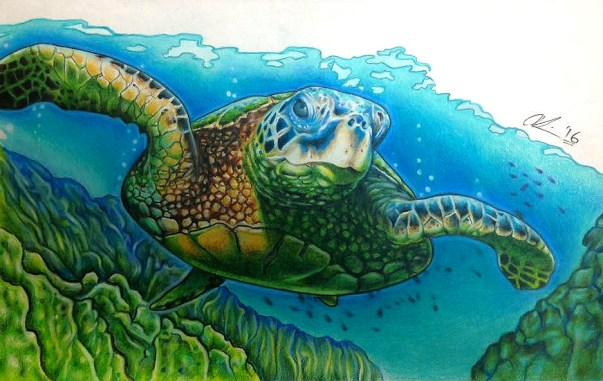 Sea turtle (La Tortuga). Pencil crayon on printer paper. 2016