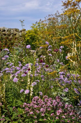 Scabious and Wild Majoram