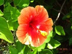 Une des beau de l'île de la Grenade
