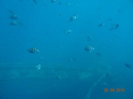 l'épave de l'Antilla