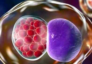 Primul vaccin împotriva infecţiei cu chlamydia, un succes la prima testare
