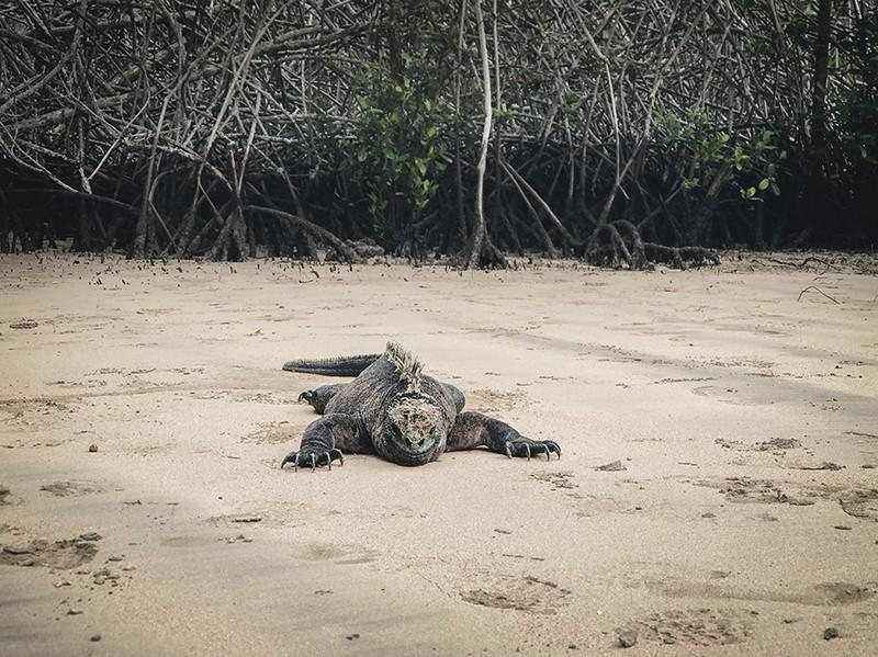 Lugares de interés en isla Isabela, Galápagos.