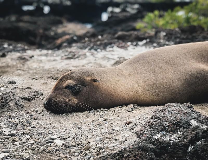 Que ver en isla Isabela, Ecuador