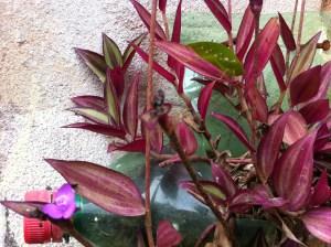 Fotocrônica: A New Leaf