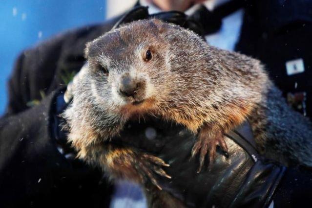 Marmota de Pennsylvania vaticina 6 semanas más de invierno