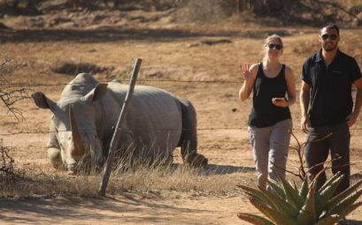 Rinocerontes Hlane Royal National Park