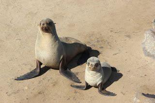 Leones marinos Cape Cross