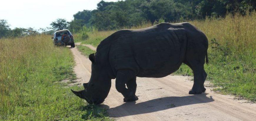 Ziwa Rhino Sanctuary, una de las paradas obligadas en nuestro itinerario de viaje a Uganda