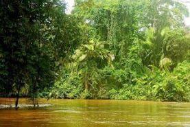 foto desde la lancha con el canal delante y los árboles que lo rodean