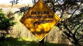 "Cartel de ""Danger Crocodiles"""
