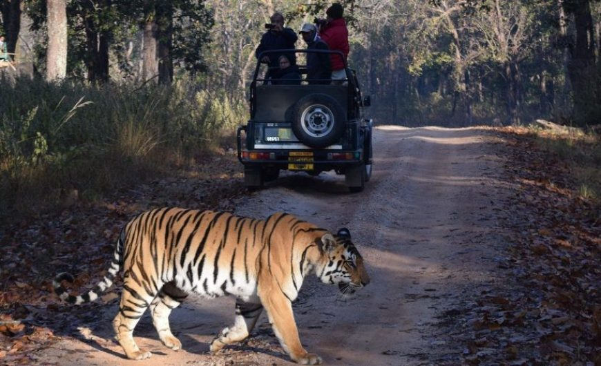 Safari para ver tigres en India