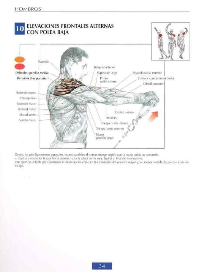 Elevaciones frontales alternas con polea baja