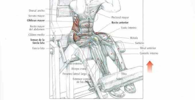 Encogimiento de abdominales o crunch en máquina específica