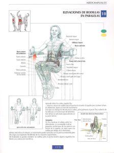 Elevaciones de rodillas en paralelas