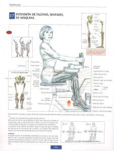 Extensión de talones, sentado, en máquina