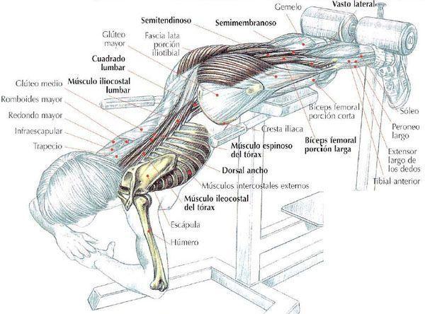 Extensión-de-tronco-lumbares-o-hiperextensiones