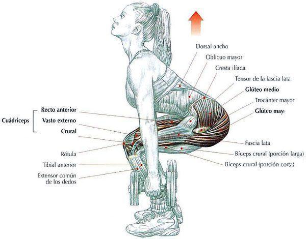 flexion de muslos con mancuernas