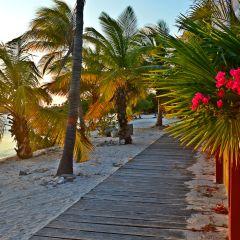 Throwback: Aruba Island Vibes