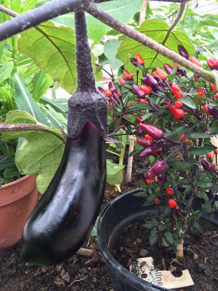 Greenhouse produce 5