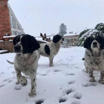 Snow dogs 2