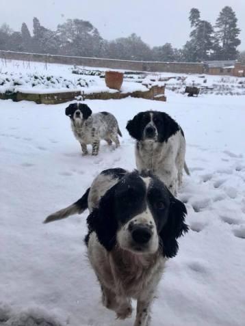 Snow dogs 4