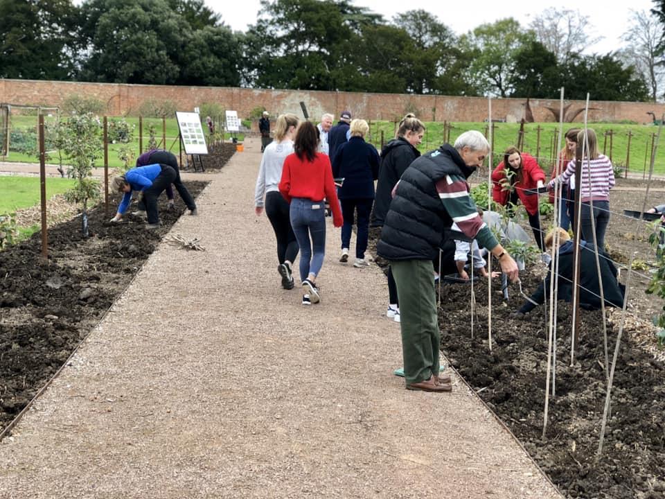 Planting crocuses 2