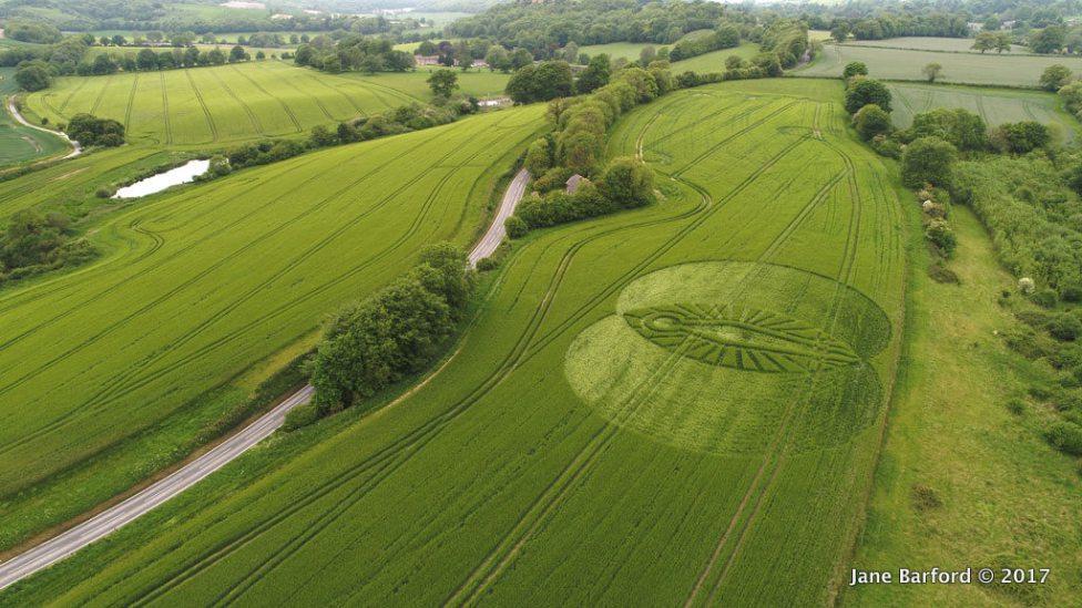 Cerne Abbas, Nr Minterne Magna, Dorset. 22 May 2017. Barley. C.180 feet wide (55m). A goddess figure.