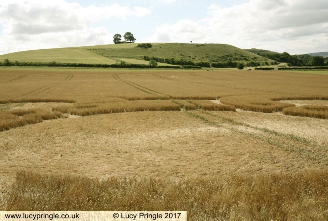 Battlesbury Hill, Nr Warminster, Wiltshire. 5 July 2017. Barley. c.200 x 200 feet (61x61m). A Shield Knot (Four Corners) or Quaternary Knot with a central circle.