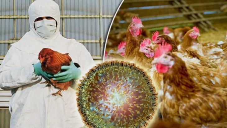 norfolk bird flu
