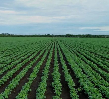 Which Type Of Agriculture Is Practiced By The Largest Percentage Of The World's People?