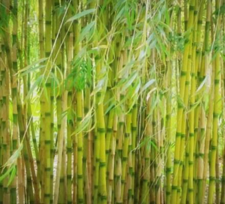 107 Edible Bamboo Shoot Species