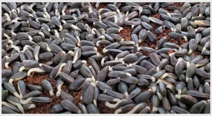 Beginning of Seed Germination