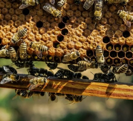 Beekeepers In The Us Report High Loss Rates And No Improvement In Colony Survival