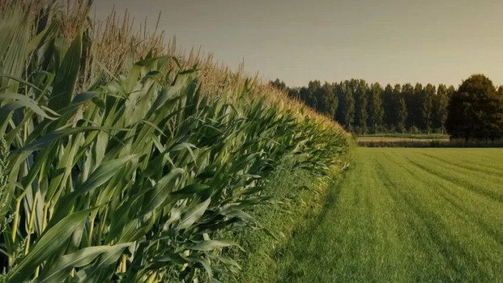 Take Part In The Pioneering Agriculture Strategy By Providing Your Feedback
