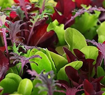 5 Microgreens That Are Packed With Nutrients