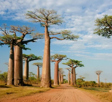 African Destinations Are Under Stress Due To Climate Change