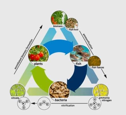 Aquaponics Principles