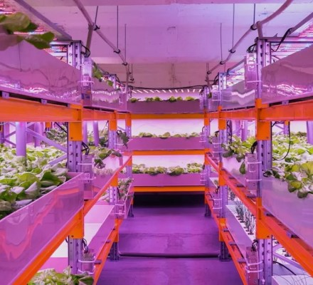 Food Safety And E Coli in Aquaponics