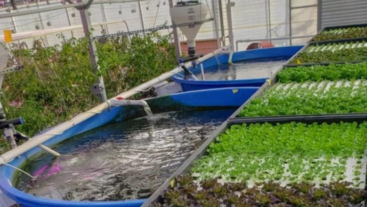 Global Insights For Aquaponics