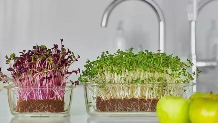 Grow Microgreens On Your Counter DIY Microgreen