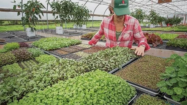 Profits From Microgreens