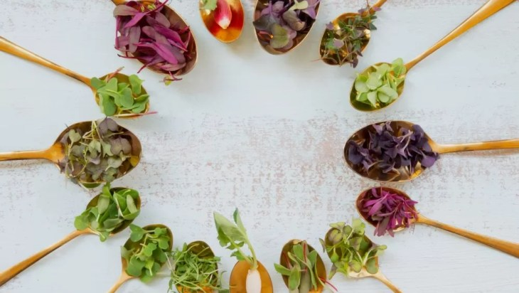 Microgreens From Tiny Israel Are Nutrient-Rich And Tasty