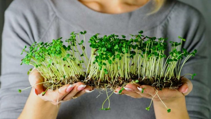 Grow Microgreens In Your Home