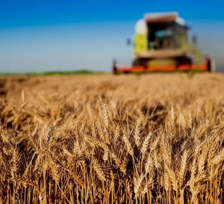 WTO Accession And Agriculture In China