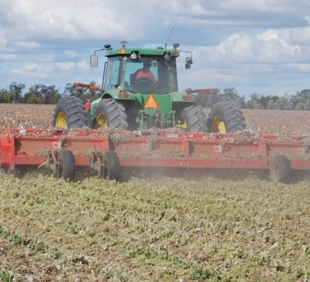 Drying And Mulching The Root Zone Might Improve Cotton