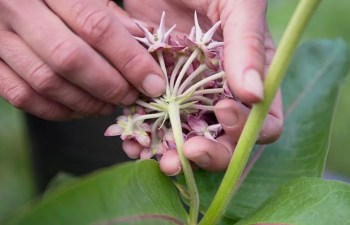 Online Programs Help Find Wild Plant Species