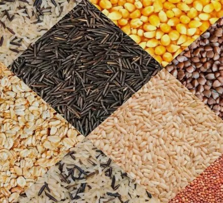 Record Increase In Exports Of Oil Seeds