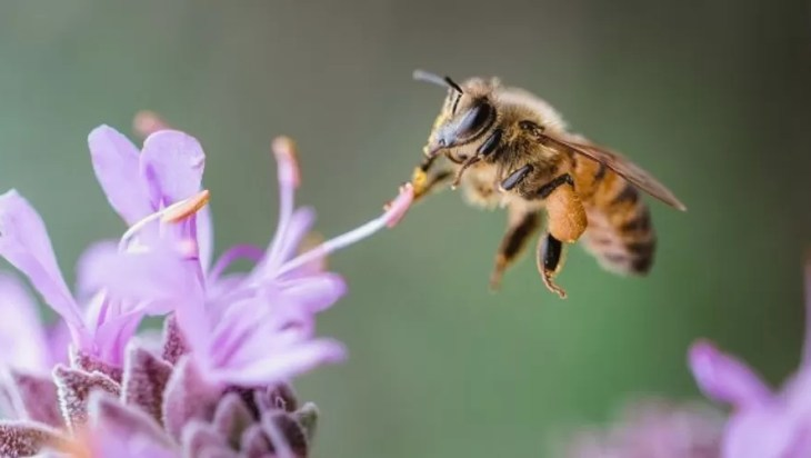 Enzyme In Plants Protect Bees