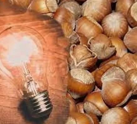 Hazelnut Shells